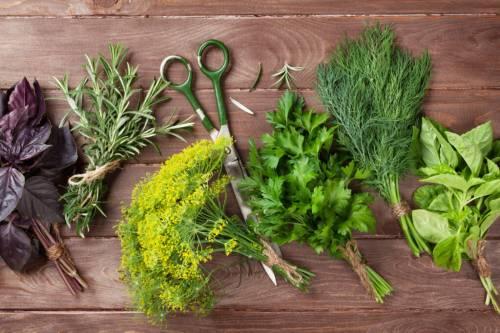hierbas aromáticas.jpg